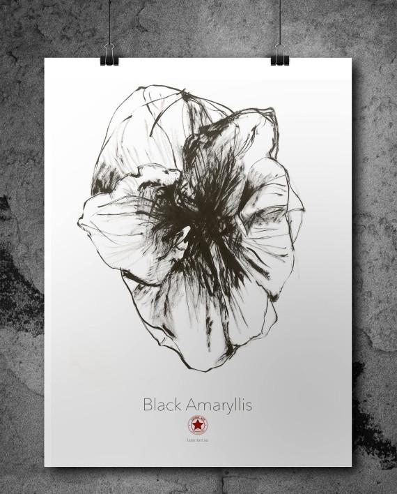 Black Amaryllis poster