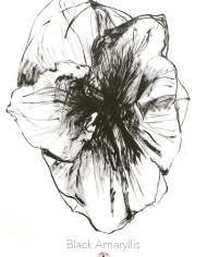 Blackamaryllis-8_2_A3affisch