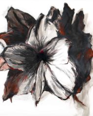 Amaryllis_Black_0130RED_A2